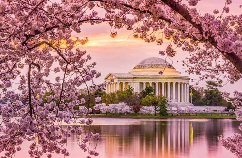 Eyre Bus tours to see the cherry blossoms in Washington D.C.