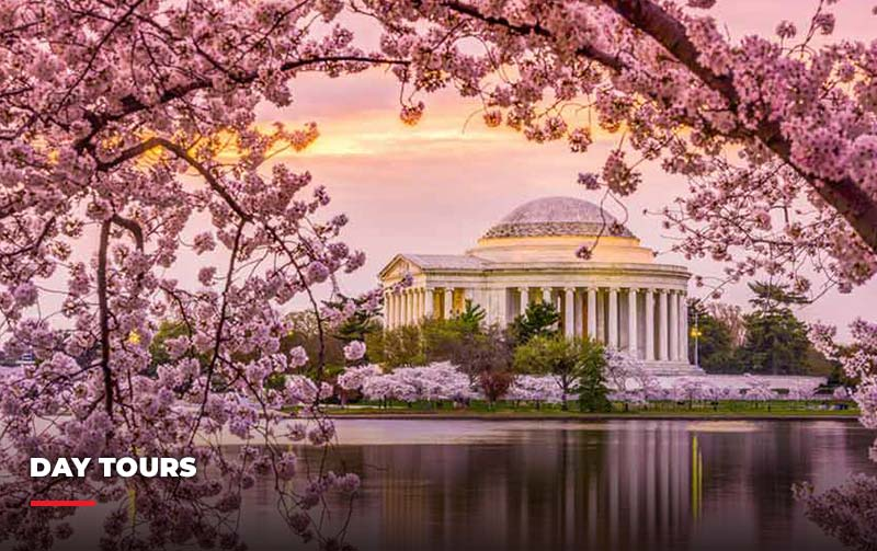 Washington D.C. under the cherry blossoms. Part of the tour packages at Eyre.